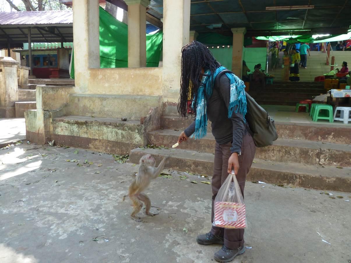 Approche des singes