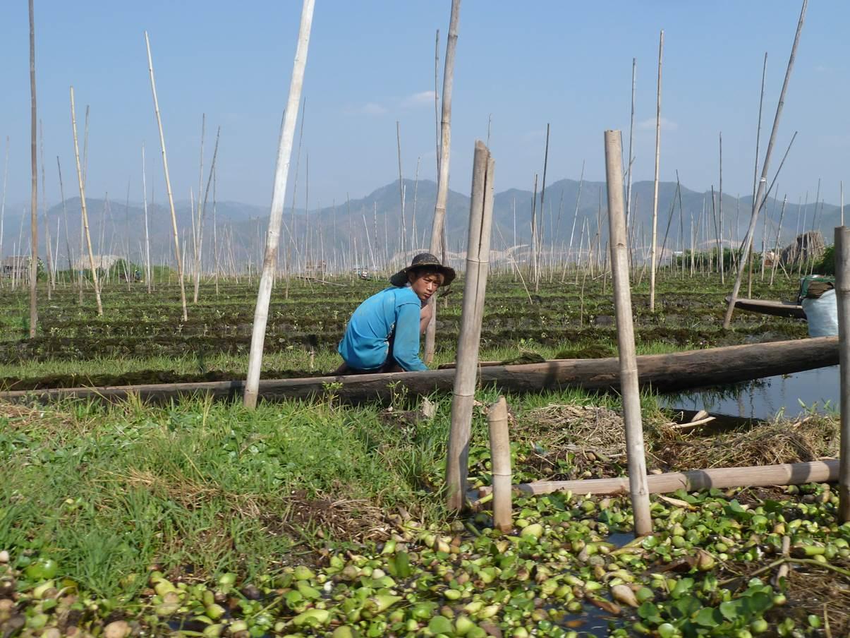 Plantation sur le lac