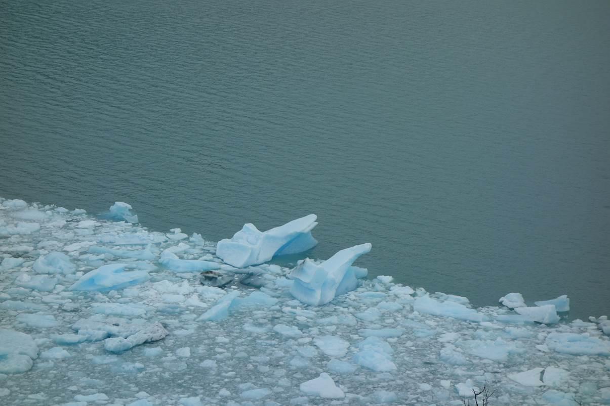 Glacier Perito Moreno - Blocs de galce tombés au pied du glacier