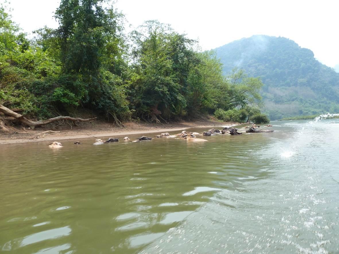 Vers Maung Ngoi Neua